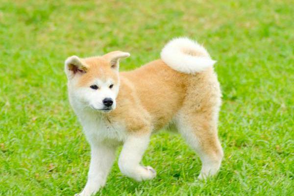 Razze di cani per padroni esperti: ecco quali sono