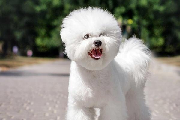 cane piccolo e bianco
