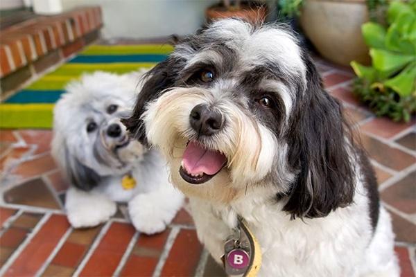 due cani che sorridono