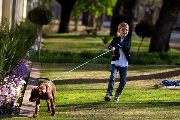 addestrare il cane a non fermarsi