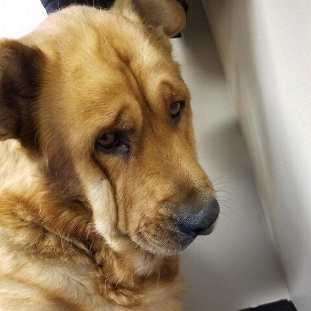 Il cane si isola da tutto e tutti dopo la scomparsa del suo proprietario