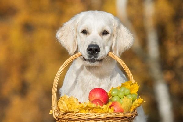 cane con cesto in bocca