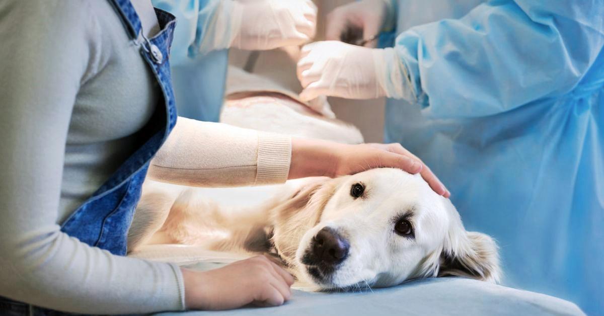 intervento chirurgico sul cane