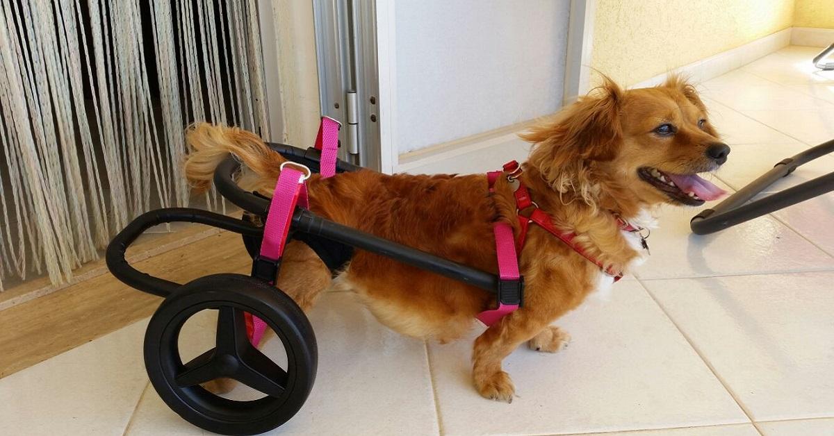 cane felice su sedia a rotelle