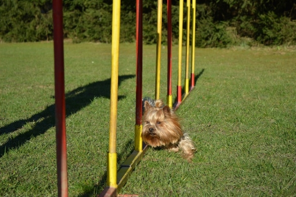 sport di agilità