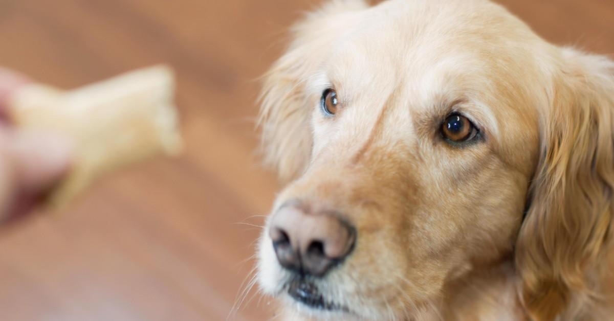 cane guarda lo snack