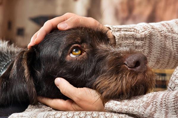 Cani ed espressioni facciali umane: sanno dire la differenza?