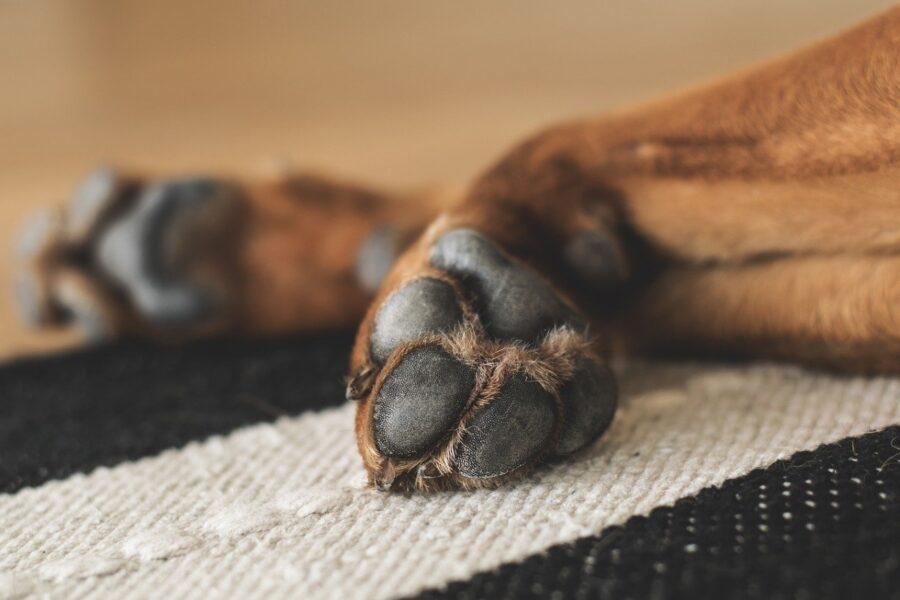zampe di cane su tappeto