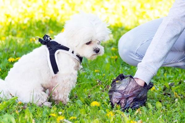 Strongilosi del cane: campanelli d'allarme e cura