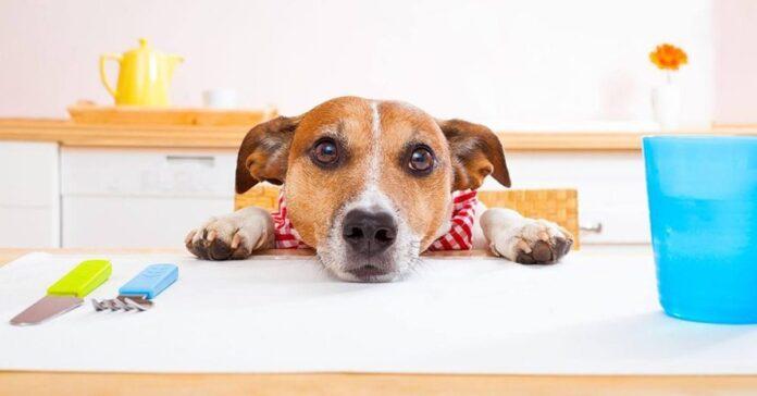 cane aspetta la pappa
