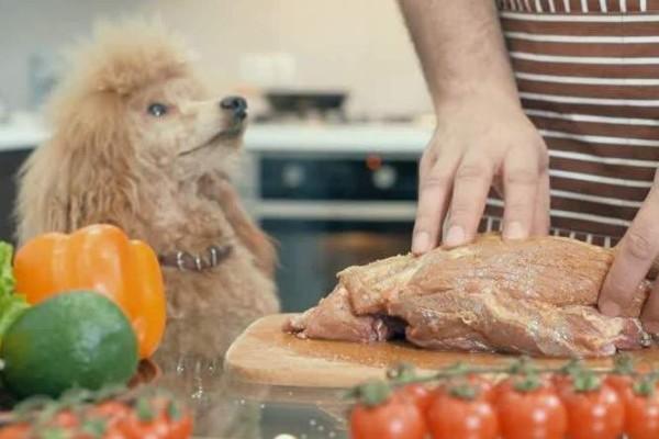 Stufato caldo per cani: ricetta fatta in casa semplice e veloce