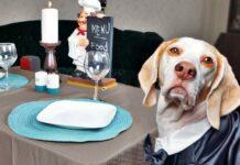 cane vestito elegante