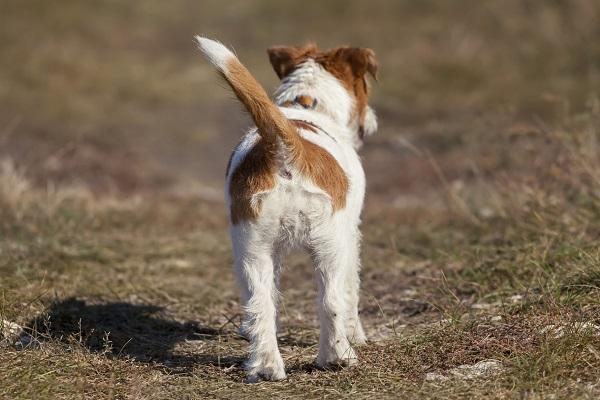 cane di spalle