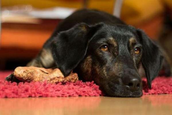 Ulcera colica nel cane: tutto quello che c'è da sapere