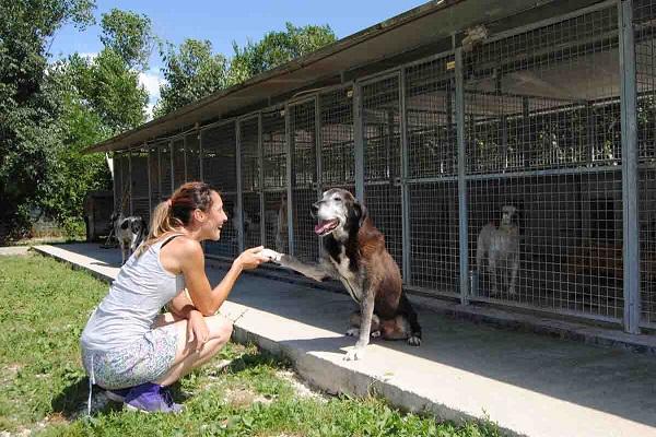 ragazza adotta cane al rifugio