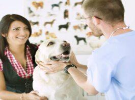 cani con spese veterinarie alte