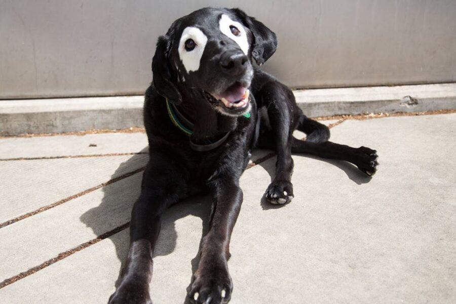 cane con macchie bianche intorno agli occhi