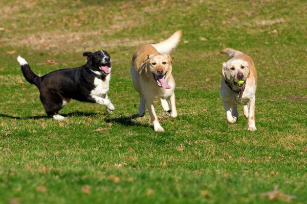 Zona sgambamento cani: le regole da rispettare per Fido