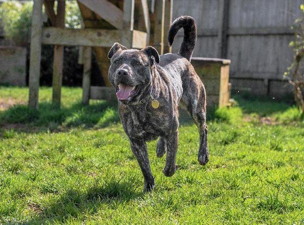 Faith, il cane più solo d'Inghilterra ha trovato famiglia