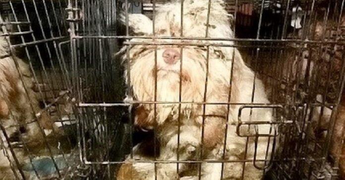 54-cani-chiusi-in-gabbia-i-soccorritori-li-hanno-salvati-dal-primo-allultimo