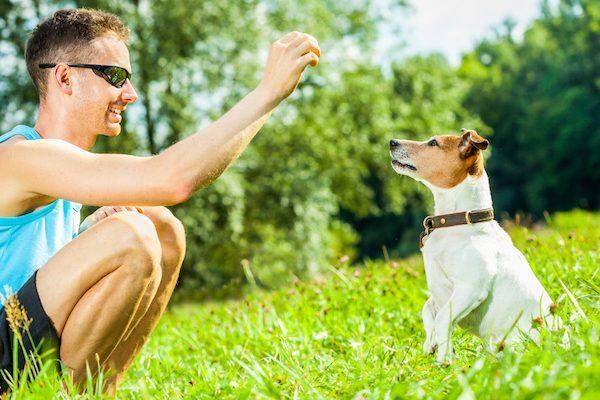 Addestrare un cane territoriale: si può fare? E come?