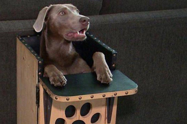cane su seggiolone