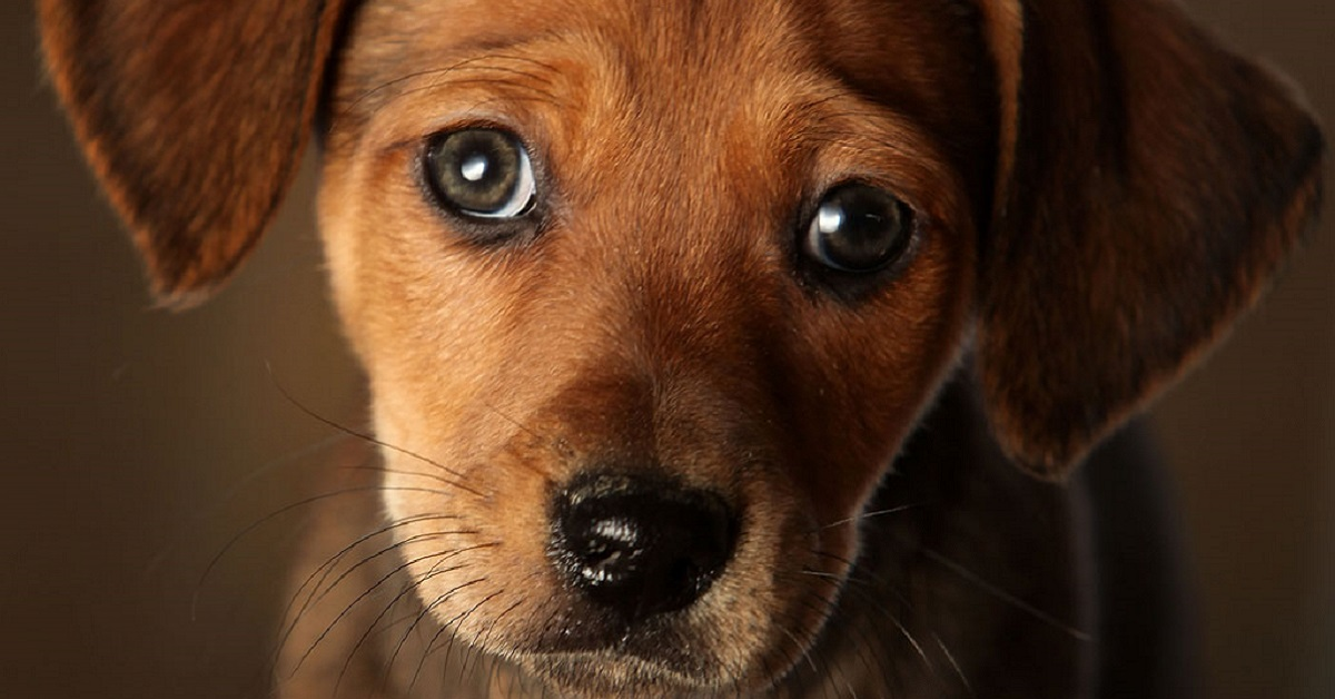 cane con occhi tristi