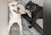 Cane Aeida insieme ad un altro cane