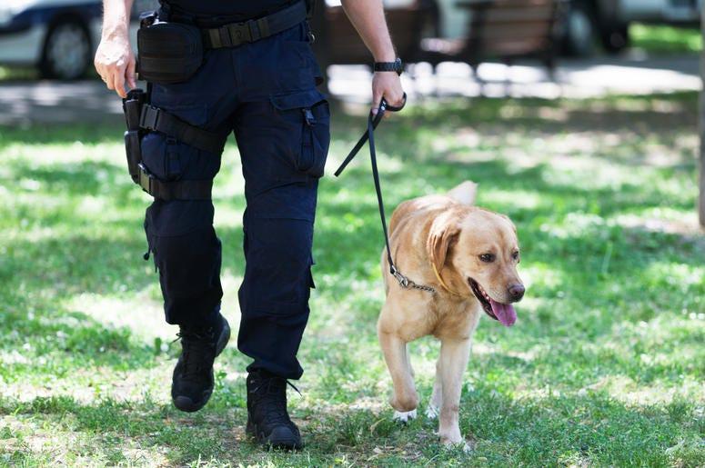 Victor, il cane che ha trovato la felicità grazie ad un poliziotto