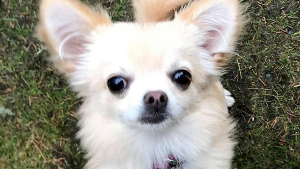 Emma, la cagnolina che stava per essere rapita da un rapace