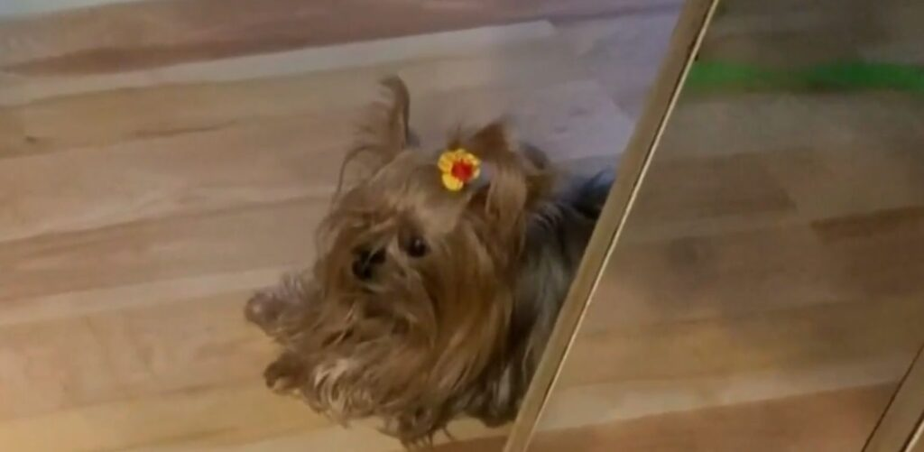 Cooper, il cane che ha perso la vita per colpa di un corriere