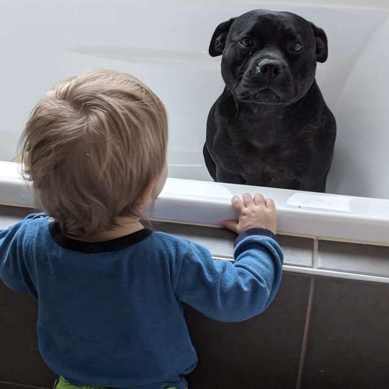 Cane dentro una vasca conun bambino