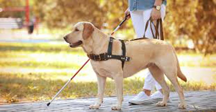 Sardara: il cane guida non può entrare al ristorante