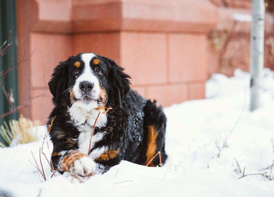 Cane nella neve