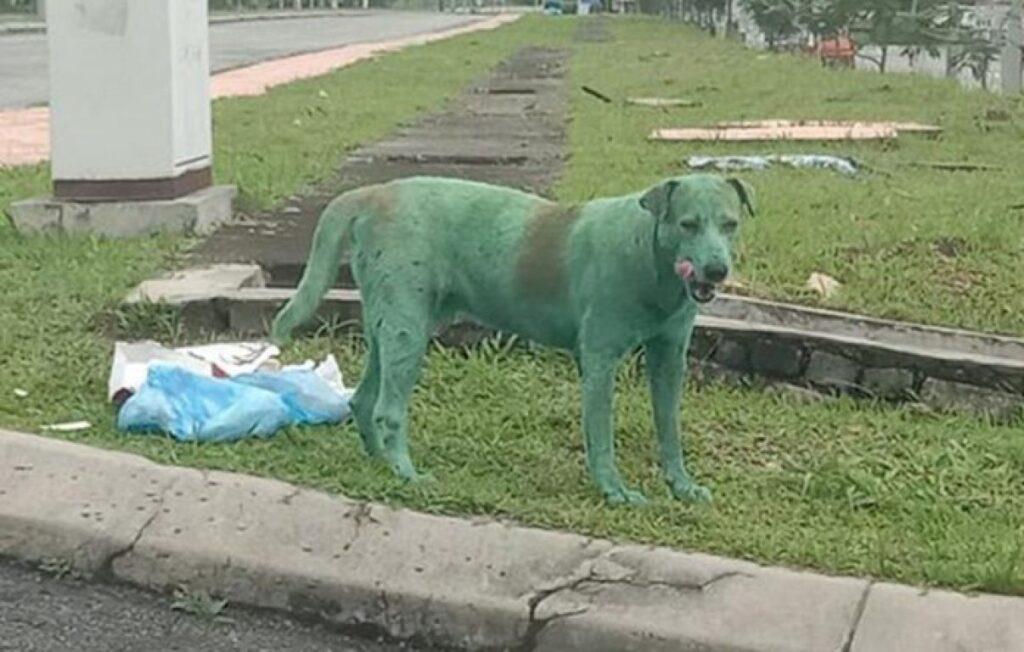 Cane ricoperto di vernice verde in gravi condizioni: si cerca il responsabile