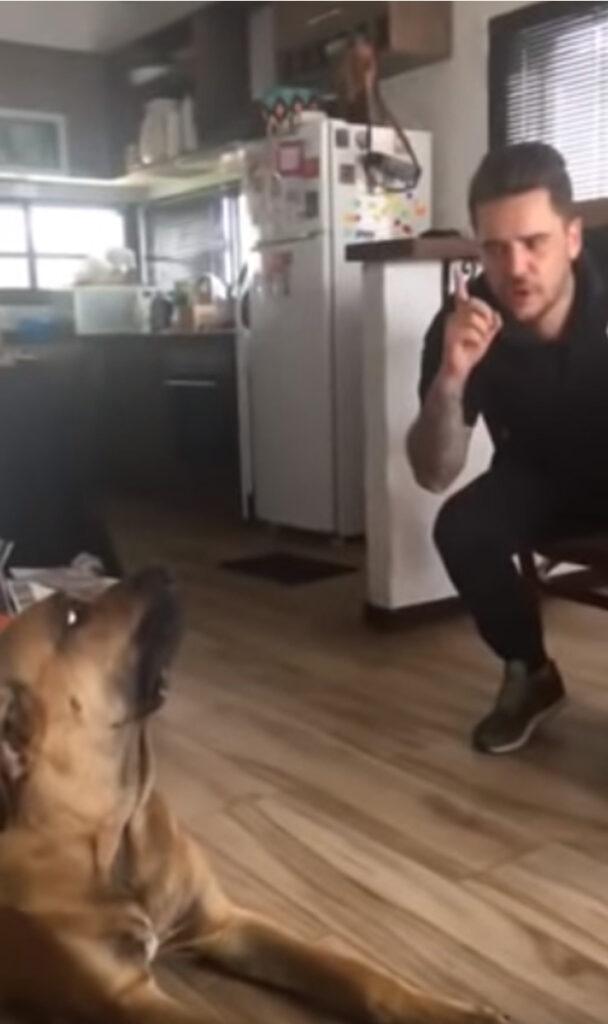 Cane rimproverato dal proprietario