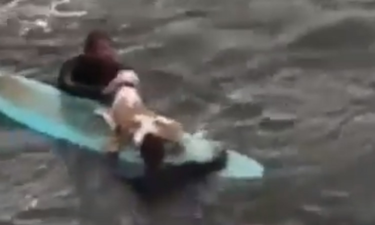 Cane salvato da un surfista