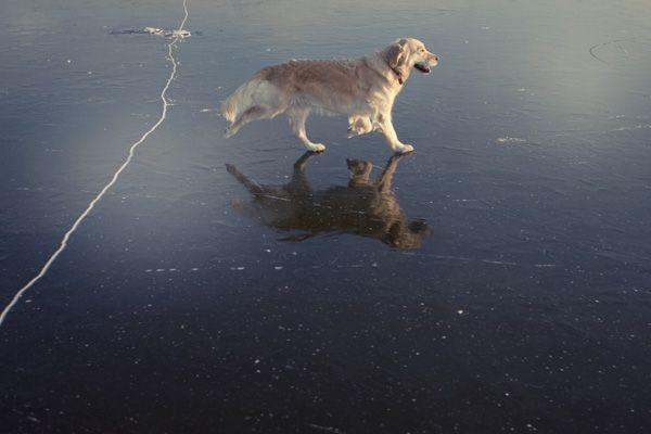 Cane sul ghiaccio