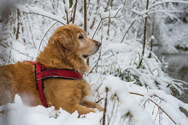cane su neve