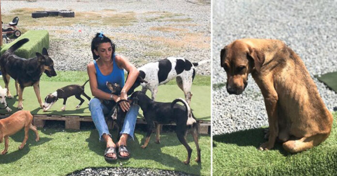 Cani Doggie Warriors Rescue Sanctuary