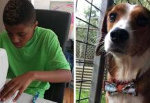 Cani aiutati da un bambino che vende papillon