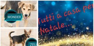 Cani in adozione Vieste