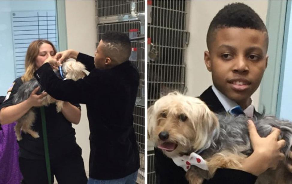 Cani randagi aiutati da un bambino