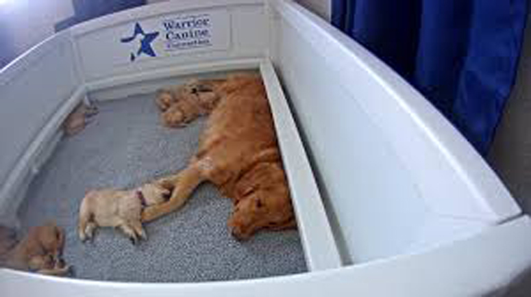 Cani salvati al Doggie Warriors Rescue Sanctuary