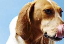trucco del naso del cane