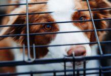 cane dentro kennel