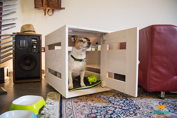 Come abituare il cane al kennel: tutti i trucchi