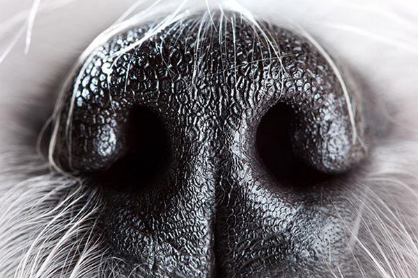 far imparare al cane a tenere qualcosa sul naso
