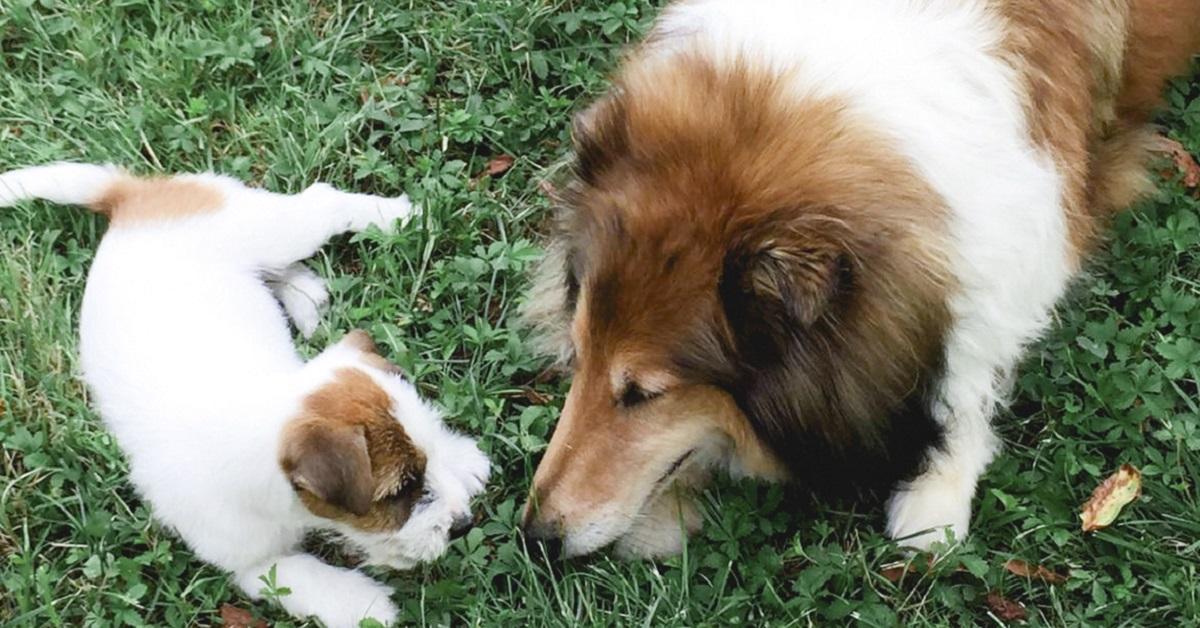 interazione fra cani