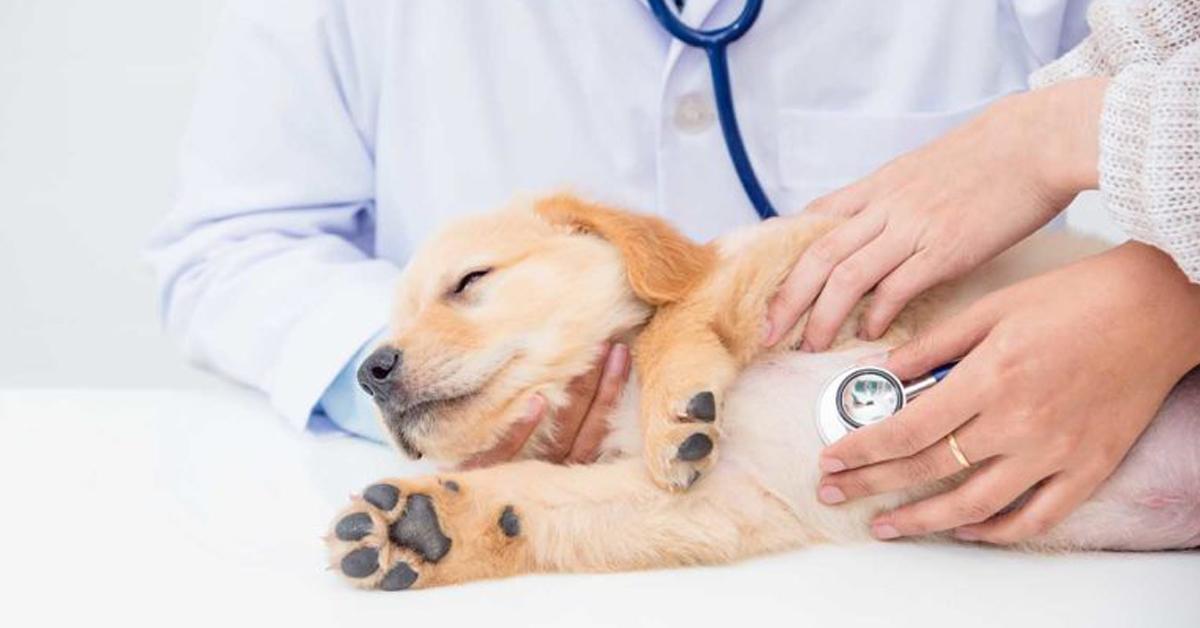 Veterinario cura il cane